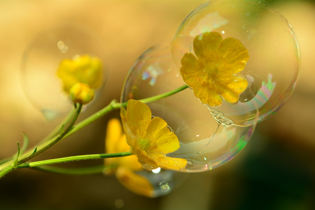 Bubbles and buttercups.... by ziggy77