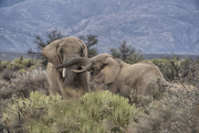 26th May 2017 - Elephant_Play_May26_2017_Africa365