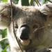 twiggy by koalagardens