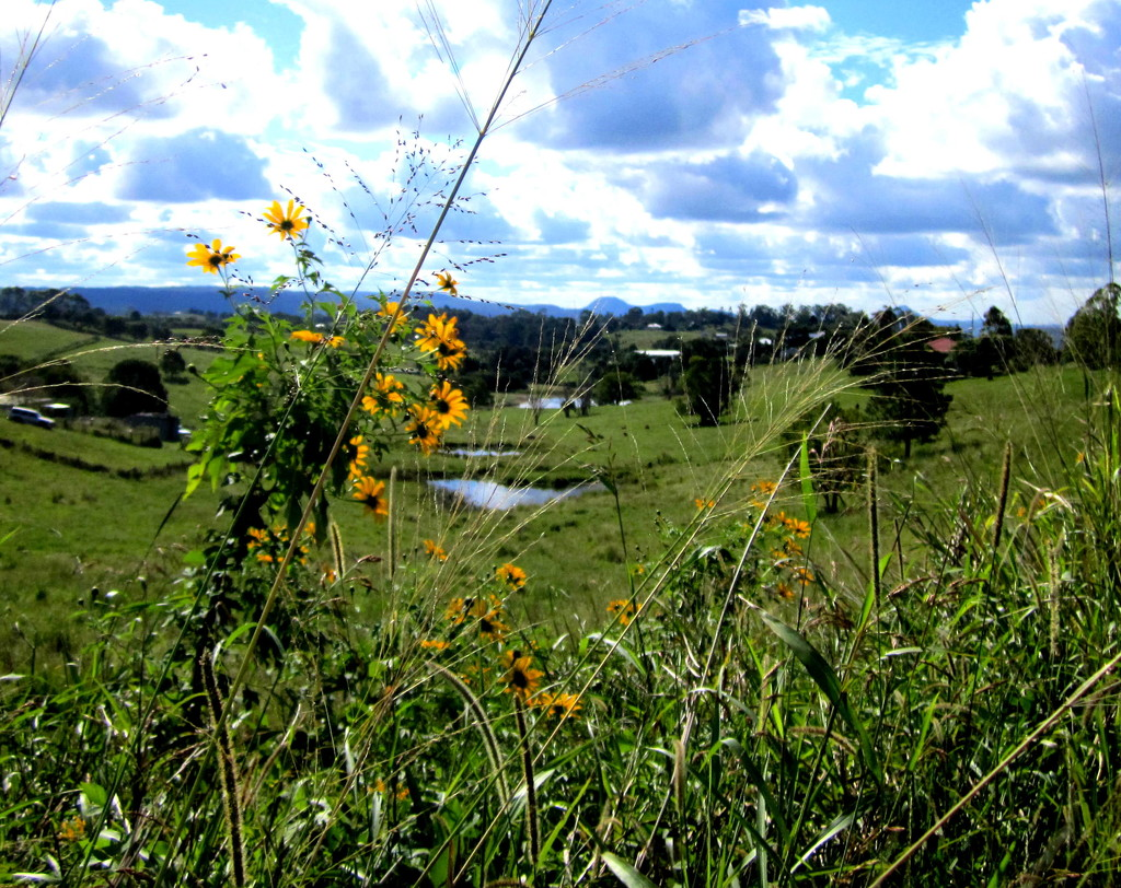 View inbetween the daisies by 777margo