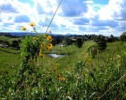 27th May 2017 - View inbetween the daisies