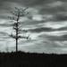 tree...  and sky...  and...  stuff...