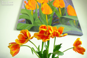 26th May 2017 - Orange and yellow tulips