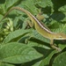 Critter in the Garden-LHG_7924