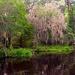 Magnolia Gardens, Charleston, SC by congaree