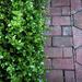 Half and half walkway and shrub