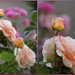 Bushes by cherrymartina