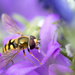 Hoverfly by leonbuys83