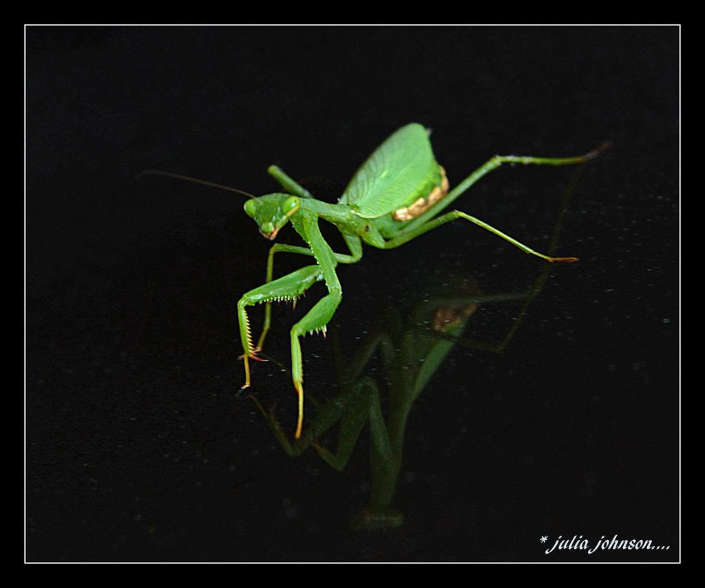Prey Mantis... by julzmaioro