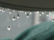 27th Dec 2010 - Rain! Rain! Go Away!