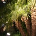 California Palms by kerristephens