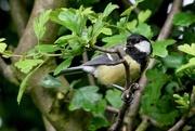 30th May 2017 - A BIRD IN A BUSH