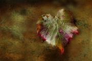 31st May 2017 - Autumn Leaf