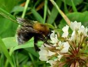 31st May 2017 - Counting bees