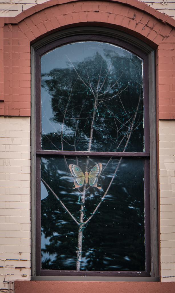 In the window by randystreat