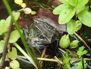 1st Jun 2017 - 30 Days Wild - Day 1 - The Garden Pond