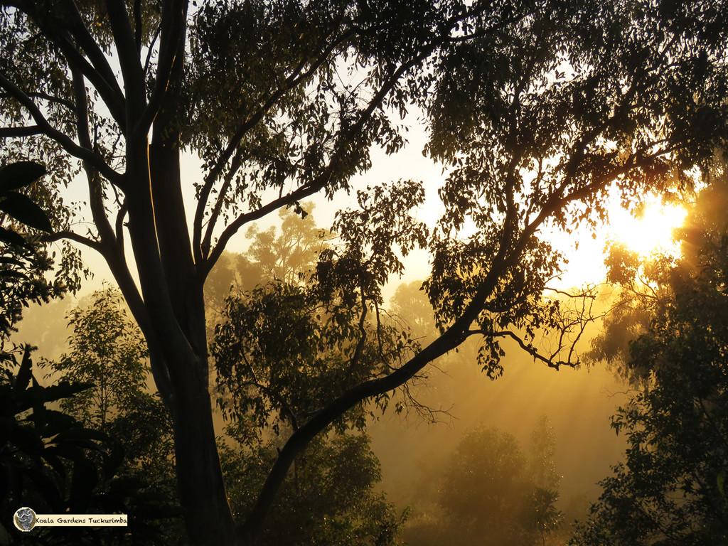 golden sunrise by koalagardens