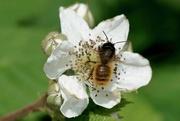 2nd Jun 2017 - BEE GOING