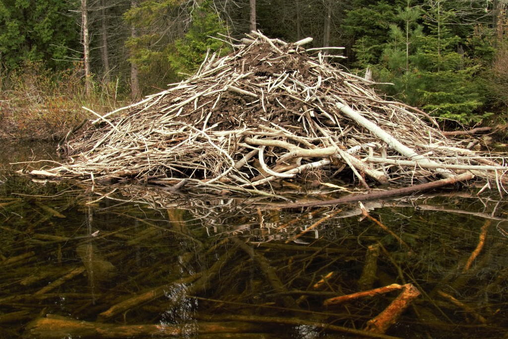 Beaver Lodge  by radiogirl