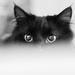 Cheshire Cat  by vera365