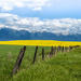 Canola Field Landscape by 365karly1