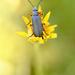 Cool blue bug sitting in a yellow flower! by fayefaye
