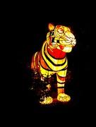 30th May 2017 - Tiger