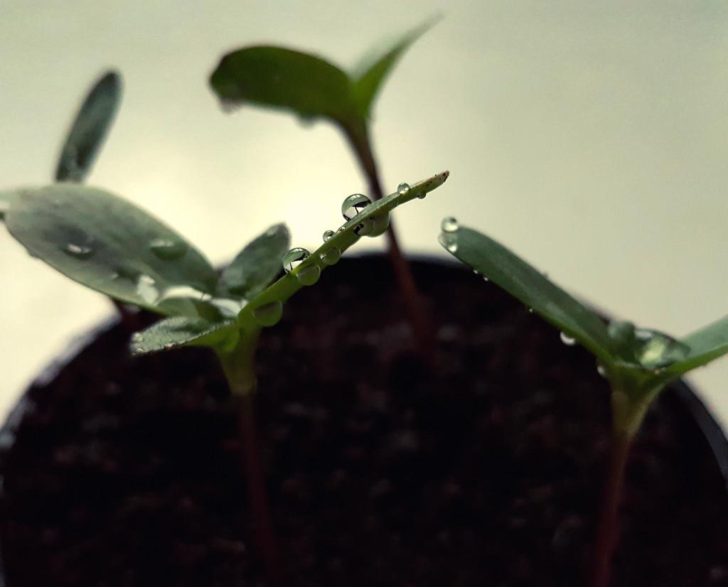Seedlings by m2016
