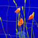 Alt Flower 5 by francoise