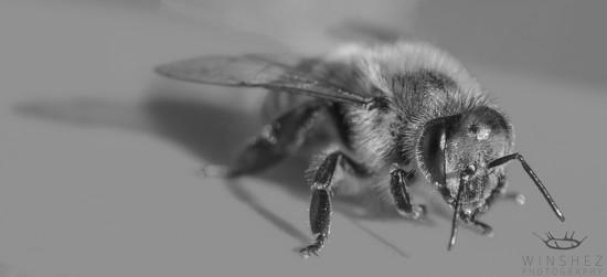 bee by winshez