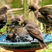 I Think We're Going To Need a Bigger Bird Bath by moviegal1