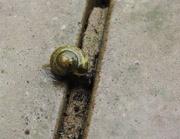 5th Jun 2017 - 30 Days Wild - Day 5 - Snail in the Rain