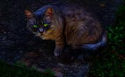 6th Jun 2017 - Cat