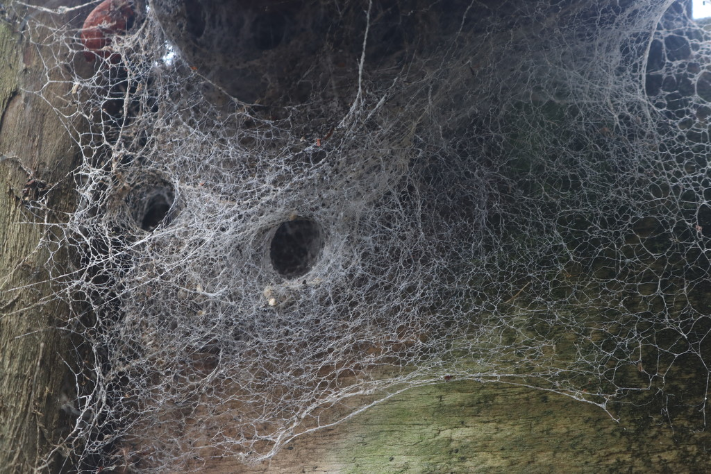masked web? by gilbertwood