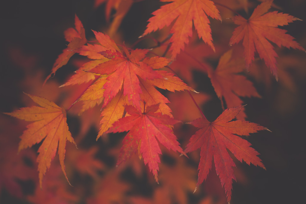 Autumn leaves in winter by brigette