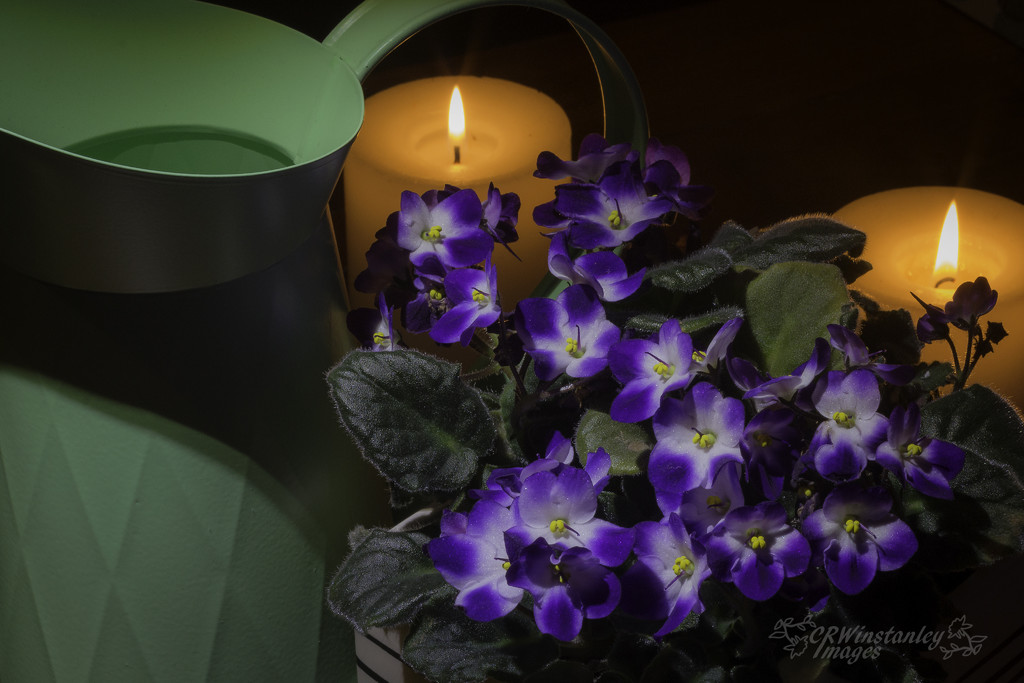 Day 159 Violets and Candles by kipper1951