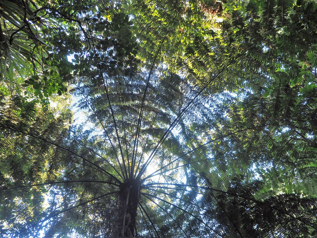 Looking up ,love the lace look of the Punga fronds . by Dawn