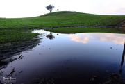 10th Jun 2017 - Puddle in a paddock