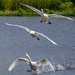 Landing by tonygig