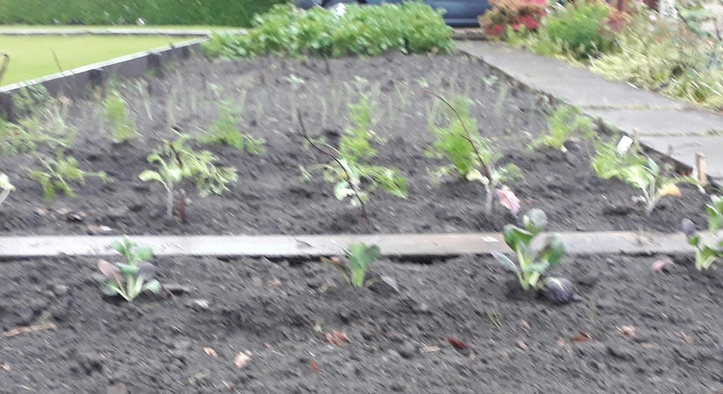 Planting project ongoing  by sarah19