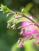 11th Jun 2017 - Unknown flower...