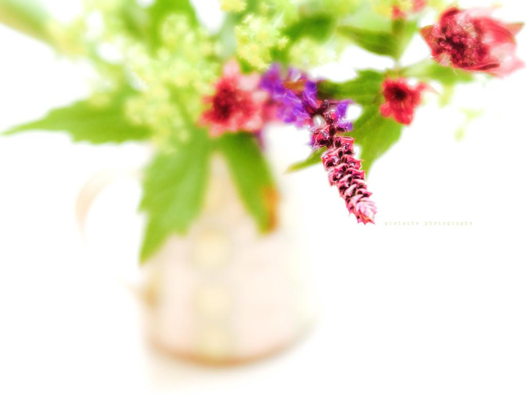 garden posy by pistache