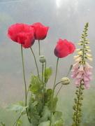 12th Jun 2017 - Wild flowers....