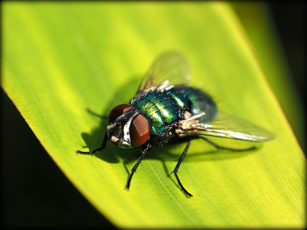 Even the flies look nice this morning! by janemartin