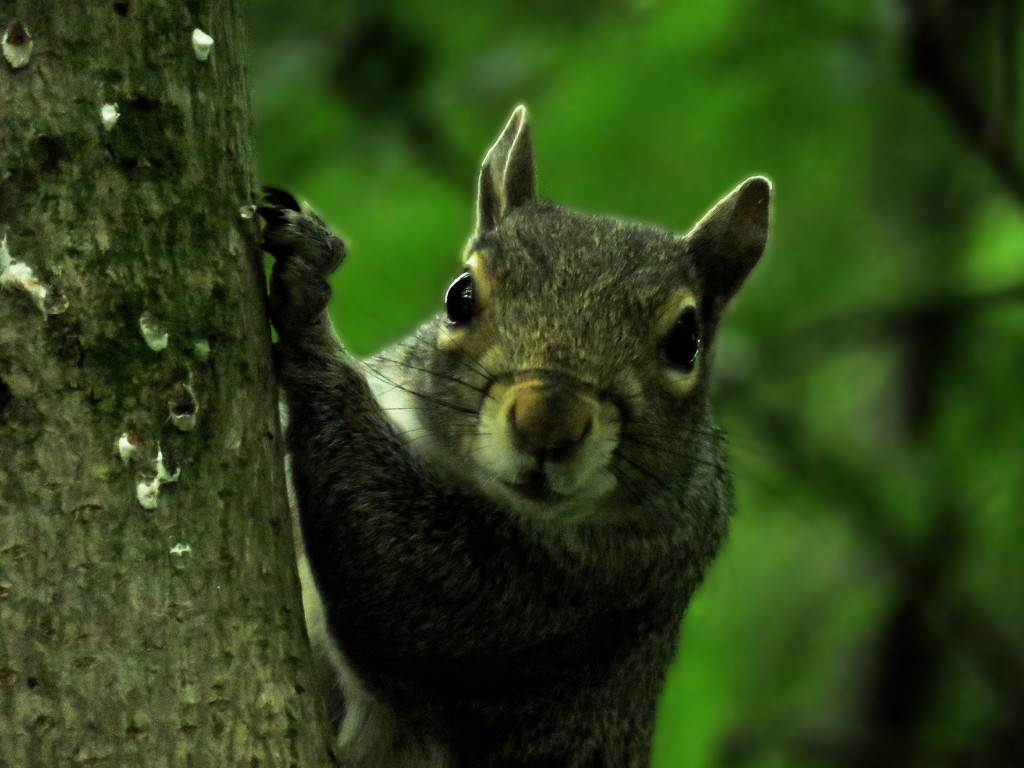 Squirrel by m2016