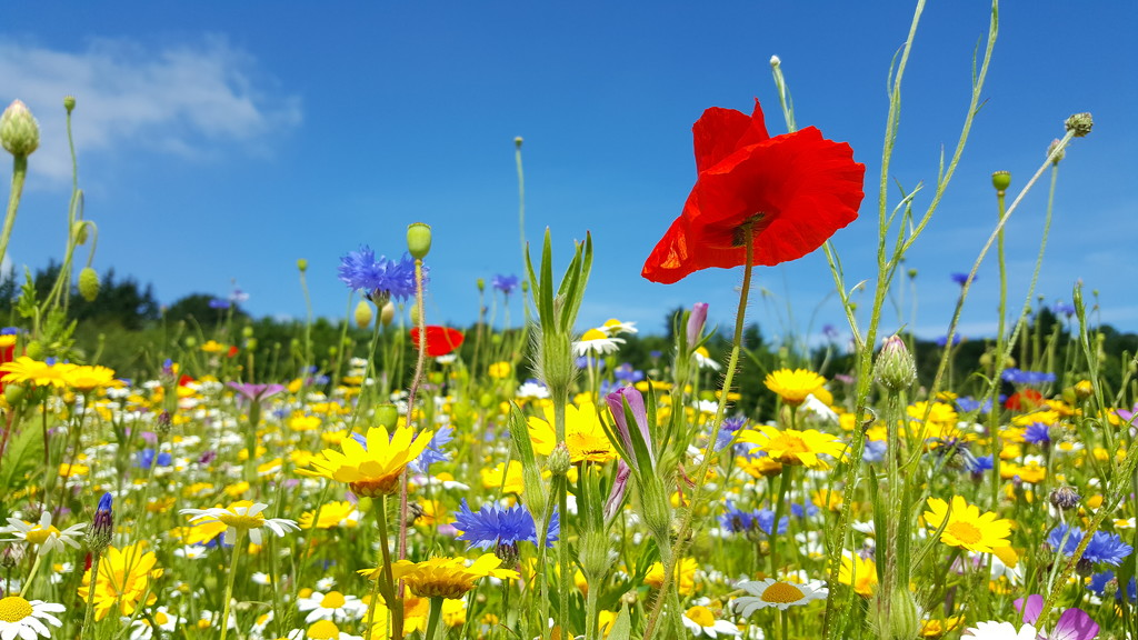 Summer Meadow by iowsara