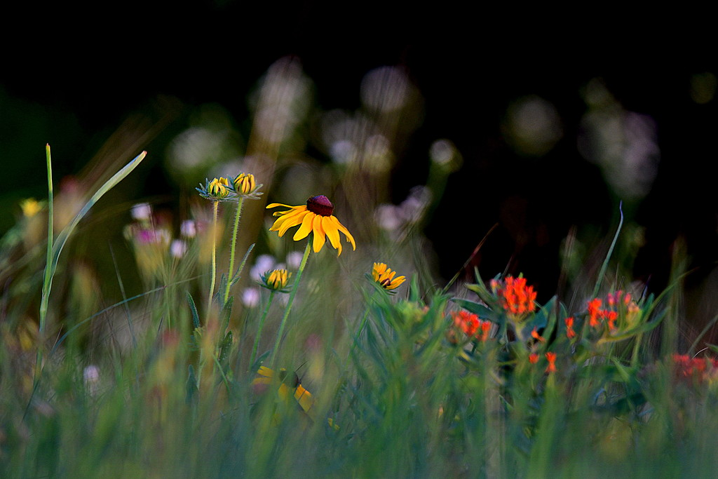 A Pallette of Kansas Wildflower Colors by kareenking