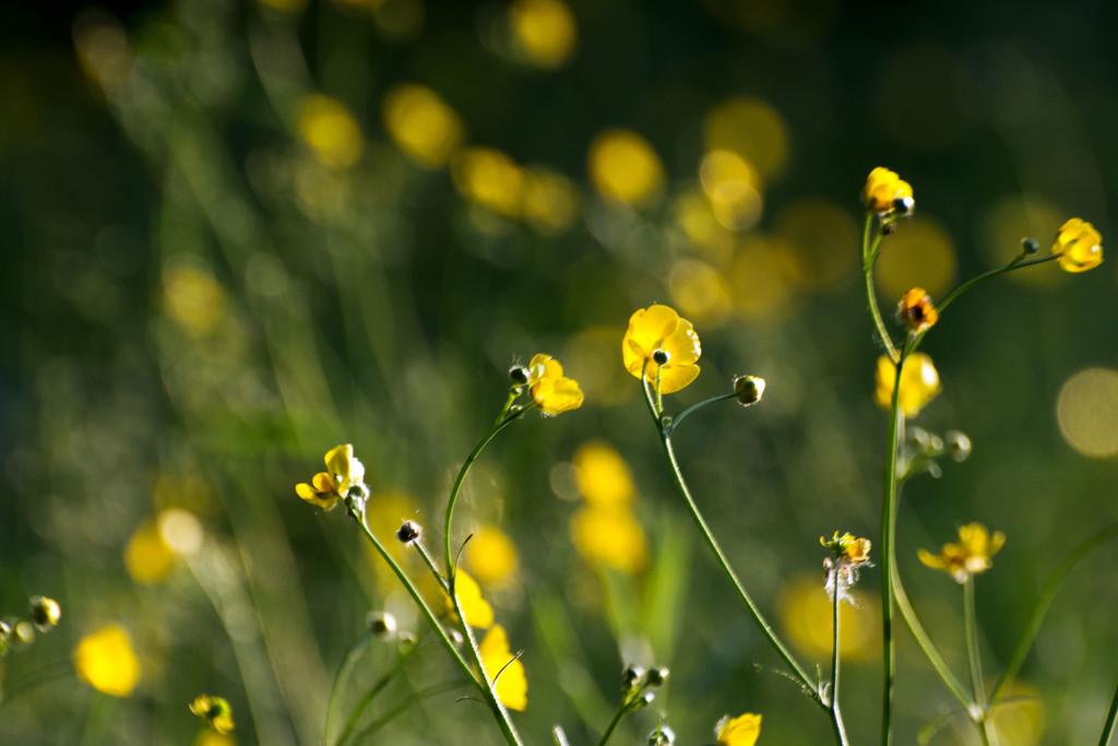 June Words - Yellow by farmreporter