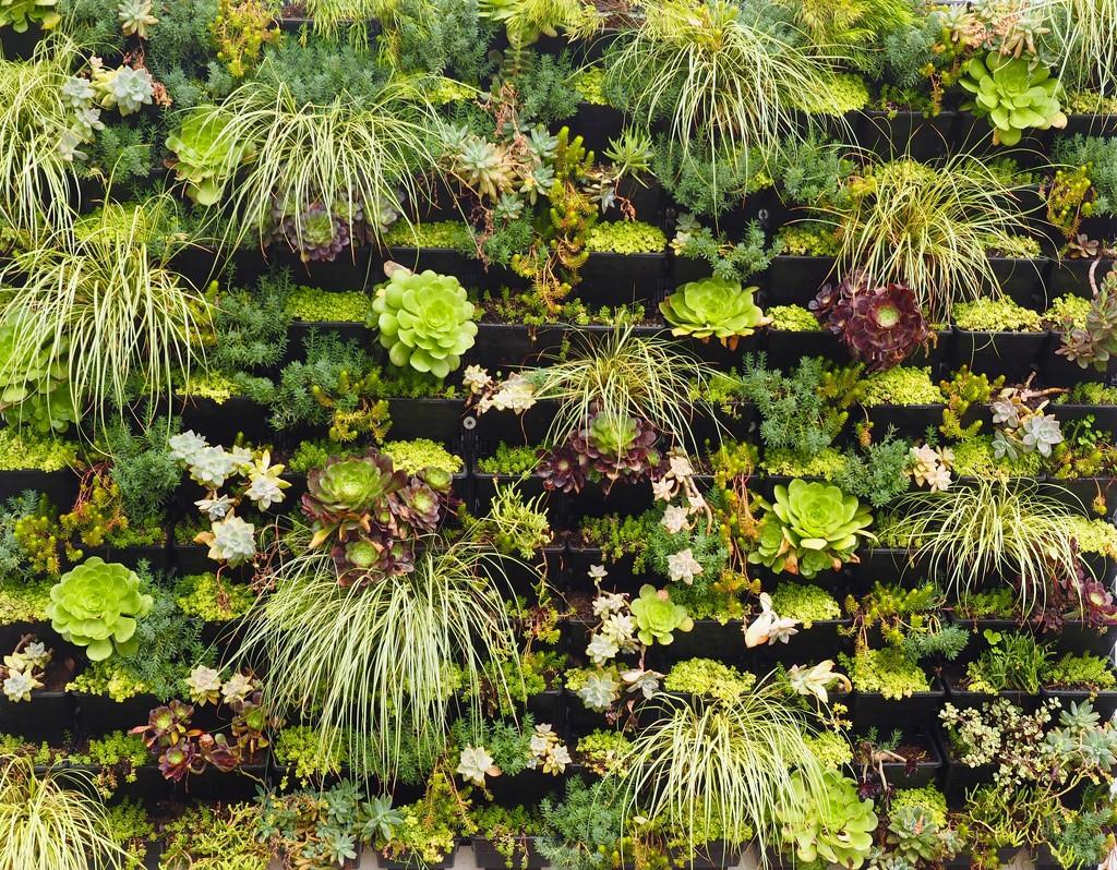 Wall Garden by redy4et