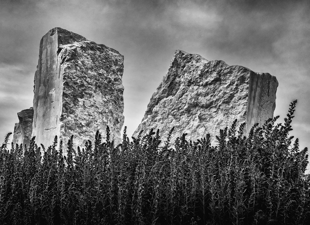 Rock Circle and Plants by davidrobinson